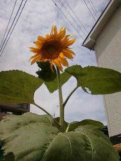 画像-0224.jpg