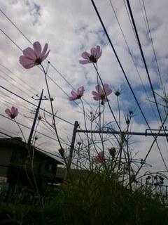画像-0378.jpg